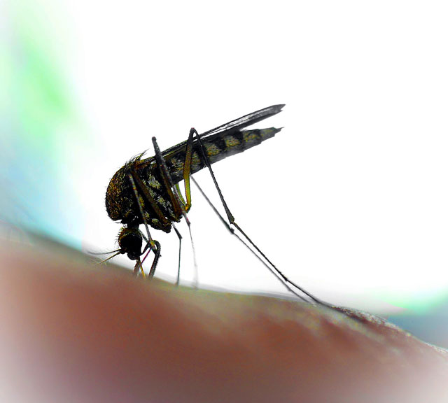 West Nile Virus small